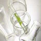 Knospe wächst im Reagenzglas lizenzfreie stockbilder