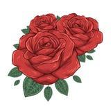 Knospen der Rosen Auch im corel abgehobenen Betrag Lizenzfreie Stockbilder