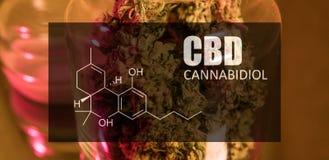 Knospen des Hanfmarihuanas mit dem Bild des Formel CBD cannabidiol lizenzfreies stockfoto