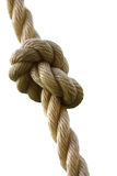 Knot. Cord on the white background, fastened in the knot royalty free stock photos