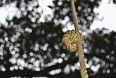 Knot bokeh Stock Images