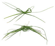 Knot and bow from a grass Royalty Free Stock Images