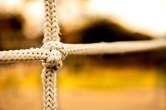 Knot close-up on sunny day royalty free stock photography