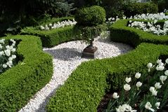 Knot garden with white tulip flowers Royalty Free Stock Photos