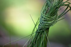 A knot in the grass royalty free stock photos