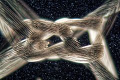 Nylon fibers under the microscope and in polarized light. royalty free stock photography