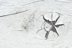 Knot on old white paint wood Stock Photos