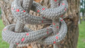 Knot in park Stock Photography
