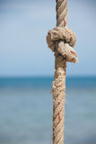 Knot on the rope and sea Stock Image