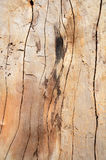 Knot wood Background Stock Photo