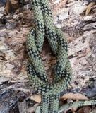 Knoten und Seil Stockfoto