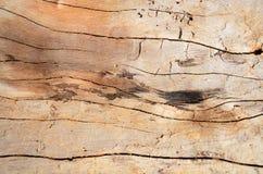 Knotenholz Hintergrund Stockbilder