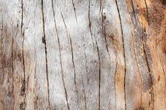 Knotenholz Hintergrund Lizenzfreie Stockfotos