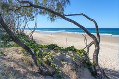 Knotiga cederträträd och havsdruvor inramar en sikt av havet och en bred strand med några personer som solbadar gå på sanden arkivbild