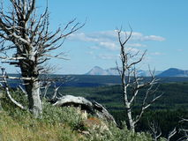 Knotiga träd och skiljelinjeberg Arkivfoton