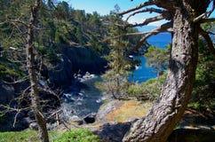 Knotiga träd på kanten av en havsklippa, Juan de Fuca Strait Royaltyfri Bild