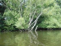 Knotiger Baum und ein See Stockbilder