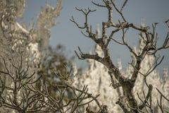 Knotiger Baum und Tempel Lizenzfreies Stockbild