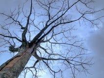 Knotiger blattloser Baum im düsteren Himmel Lizenzfreie Stockfotos