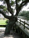 Knotiger Eichenbaum durch hölzerne Brücke lizenzfreie stockfotografie