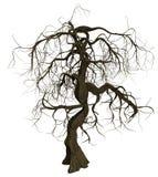 Knotigt gammalt träd med kala filialer Arkivfoto
