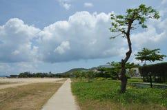 Knotigt träd på bakgrunden av moln Royaltyfria Foton