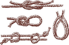 Knots. Vector drawing of a different rope knots Royalty Free Stock Image