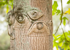 Knots in Old Tree that Look like Human Eyes Stock Photo