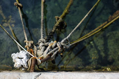 Knots and Ropes. Detail of ropes from anchored boats secured by a link Royalty Free Stock Image