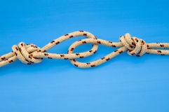 Knotted rock climbing ropes. Close up of two knotted rock climbing ropes attached via loops, isolated on blue background Stock Photography