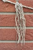 Knotted rope, raw Stock Images