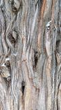 Knotty Juniper Tree Trunk Bark. The old knotty bark of a juniper tree trunk stock image
