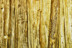 Knotty pine wooden wall textured Royalty Free Stock Image