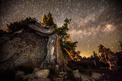 Knotty Tree Against Starry Night Royalty Free Stock Images
