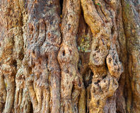 Knotty tree bark Stock Images