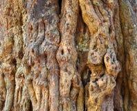 Knotty tree bark Stock Images