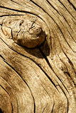Knotty wood. Wood texture from a fence Stock Photo