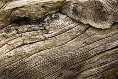 Knotty wood Royalty Free Stock Photography