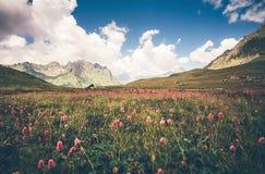 Knotweed blommor för grön dal och idylliskt landskap för blå himmel i Abchazien Arkivbild