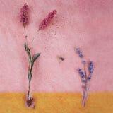 knotweed lawender黄蜂 图库摄影