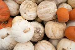 Pumkins and Gourds Piled up in a Traditional Fall Produce Display stock photos