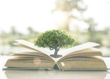 Knowledge And Wisdom Concept, Small Tree Growing On Old Book Ope Stock Photo