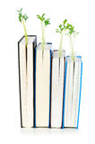 Knowledge concept with books. And seedlings Royalty Free Stock Photos