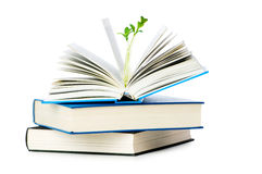 Knowledge concept with books. And seedlings Stock Image