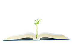 Knowledge concept with books and seedling Royalty Free Stock Photos