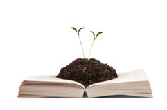 Knowledge concept - books and seedlings Stock Images