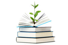 Knowledge concept - Leaves growing out of the book Royalty Free Stock Images