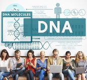 Knowledge Education Learning DNA Molecules Concept. Knowledge Education Learning DNA Molecules royalty free stock photography
