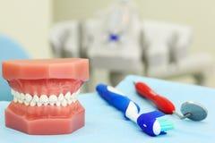 Künstlicher Kiefer, Zahnbürste und zahnmedizinisches Hilfsmittel Stockfotos