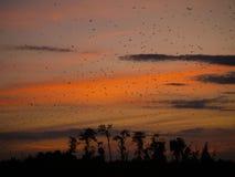 Knuppels bij zonsondergang Stock Afbeelding